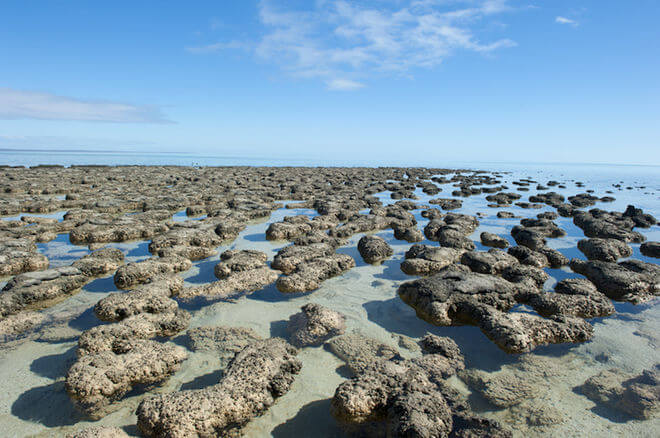 Earliest evidence of life on Earth 'found'
